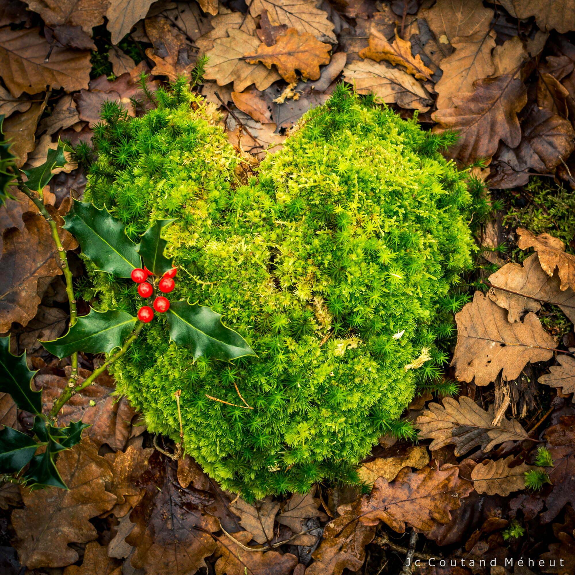 Au coeur de la forêt- Photo prise par le photographe Jean-Christophe Coutand-Méheut
