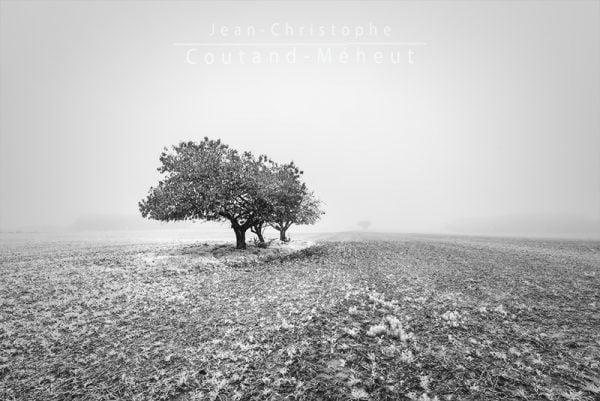La campagne en noir et blanc - Un matin dans la brume, le brouillard. Photo prise par le photographe Jean-Christophe Coutand-Méheut