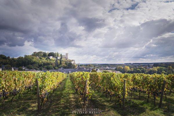 Vignes auClos de l'Hospice de Chinon - Photo réalisée par le photographe Jean-Christophe COUTAND MEHEUT
