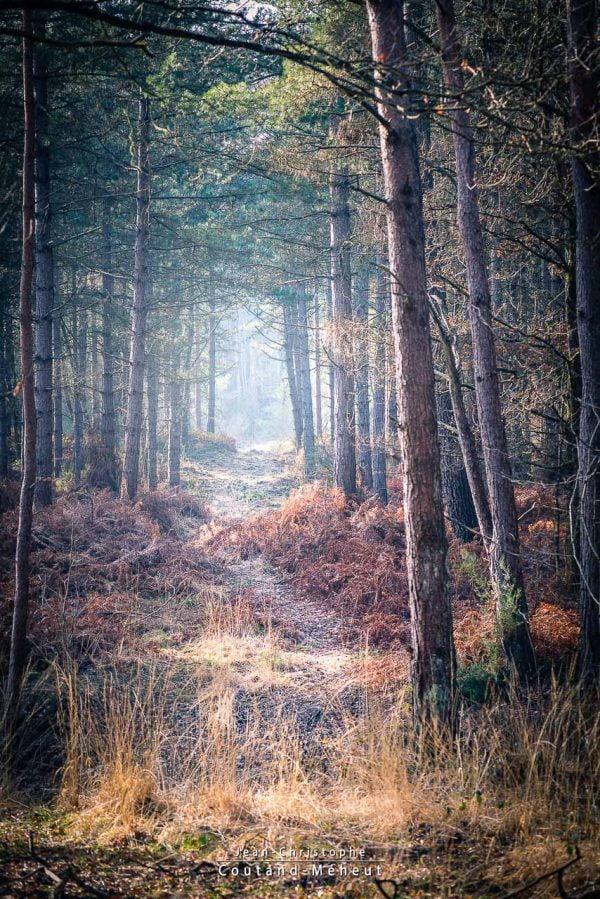 Forêt de Chinon - Tirage d'art - Photo réalisée par le photographe Jean-Christophe COUTAND MEHEUT