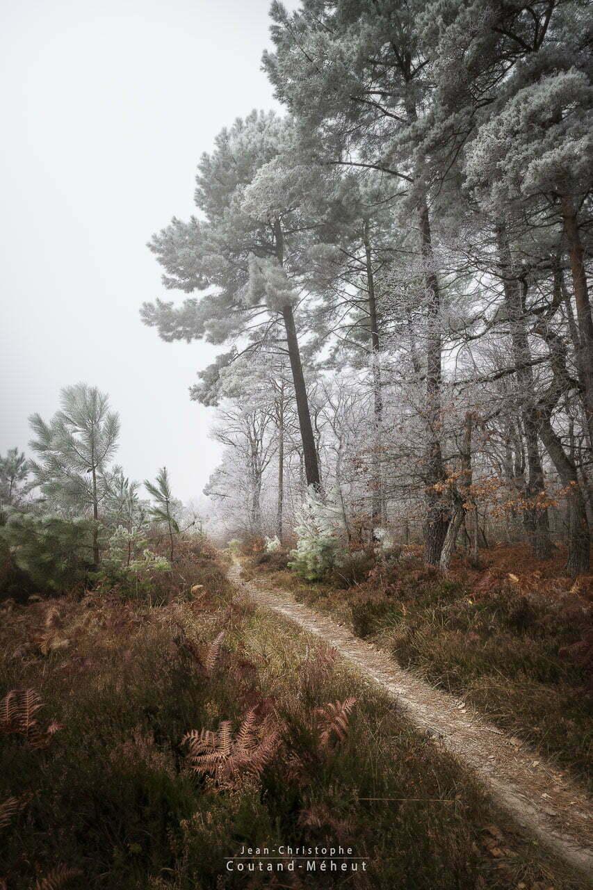 Forêt de Chinon en hiver – Tirage d'art