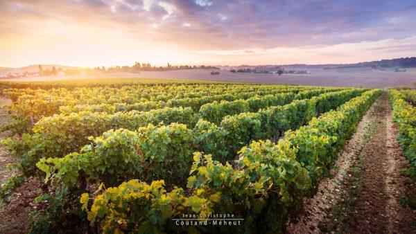 Vignes dans le Véron - Tirage d'art - Photo réalisée par le photographe Jean-Christophe COUTAND MEHEUT