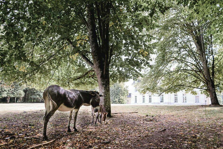 Photographe de mariage ânes au château de Saint-Senoch